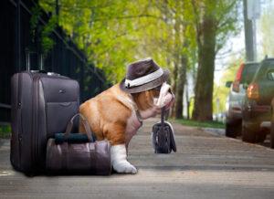 ارسال نمونه های هاری سگ و گربه به اروپا